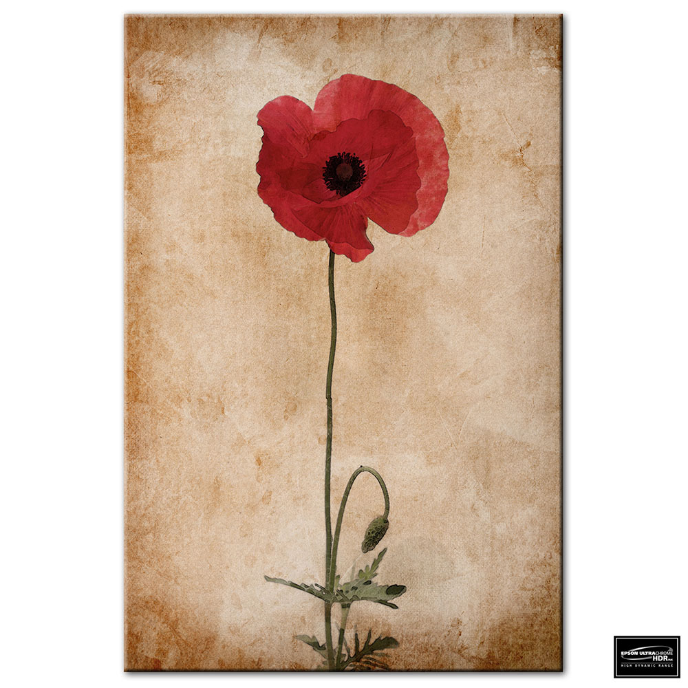 Floral Red Poppies   BOX FRAMED CANVAS ART Picture HDR 280gsm