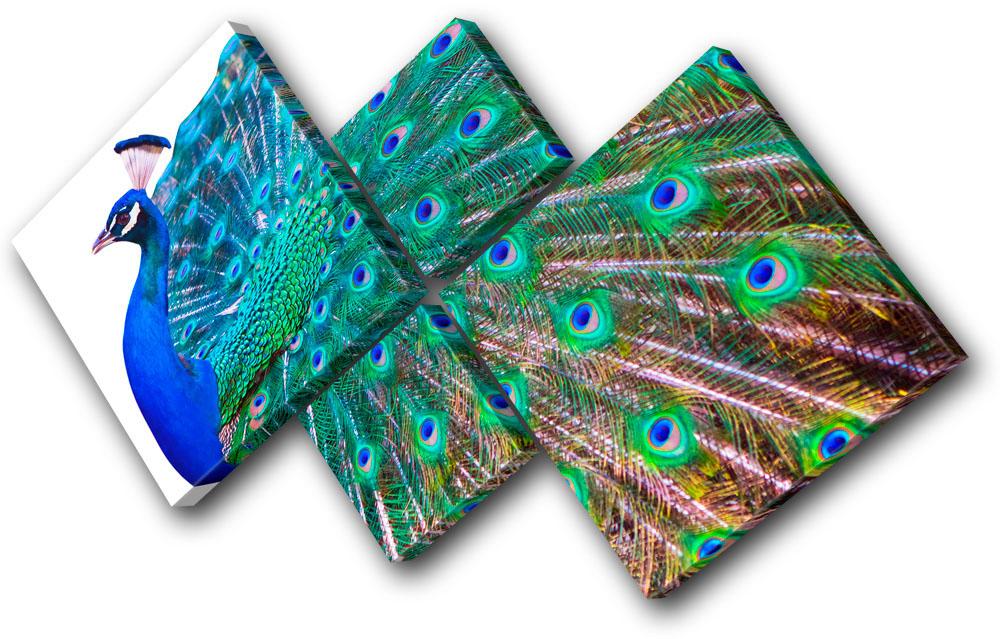 Greatest Animals Peacock Feathers MULTI CANVAS WALL ART Picture Print VA   eBay AR99